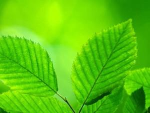 Three reasons to go green